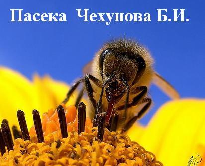 Cайт пчеловода Бориса Ивановича Чехунова!